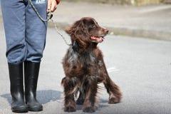Hund und Meister Stockbild