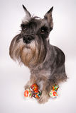 Hund und Ostereier lizenzfreie stockbilder
