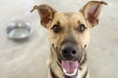 Hund und Schüssel hungrig Stockfotos