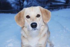 Hund und Schnee Stockfoto