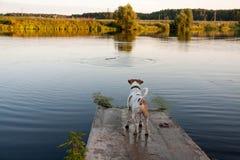 Hund und See Lizenzfreies Stockbild