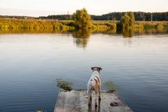 Hund und See Stockfoto