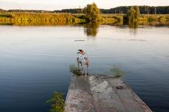 Hund und See Lizenzfreies Stockfoto