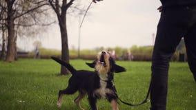 Hund und sein Eigentümer - kühler Hund und junger Mann, die Spaß in einem Park hat - Konzepte der Freundschaft, Haustiere, Zusamm stock video