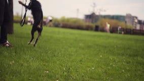 Hund und sein Eigentümer - kühler Hund und junger Mann, die Spaß in einem Park hat - Konzepte der Freundschaft, Haustiere, Zusamm stock footage