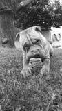 Hund und Spielzeug stockbild