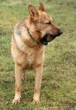 Hund und Stein Stockfotos
