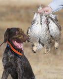Hund und Waldhuhn Stockfotos