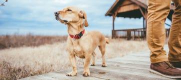 Hund und Wanderer, die auf einem hölzernen Gehweg stehen Lizenzfreie Stockfotos
