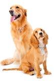 Hund und Welpe Stockbilder