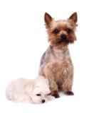 Hund und Welpe Stockbild