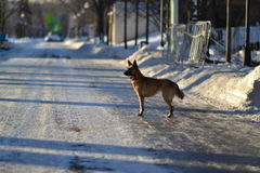 Hund und Winter Stockfoto