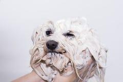 Hund unter der Dusche stockbilder