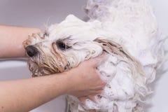 Hund unter der Dusche lizenzfreie stockbilder