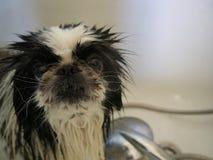Hund unter der Dusche lizenzfreies stockbild