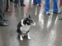 Hund unter der Menge stockfotografie
