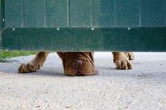 Hund unter Gatter Stockfoto