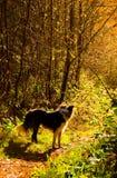 Hund unter glühenden Bäumen stockfoto
