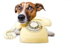 Hund unter Verwendung eines gelben Telefons Lizenzfreies Stockbild