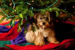 Hund unter Weihnachtsbaum Stockbilder