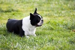 hund utanför royaltyfria bilder