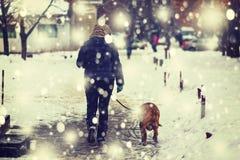 Hund vinter, snö, förkylning, vit, kvinna, livsstil, kvinnlig som är lycklig, natur, skog, livsstil, ungt, djurt som är rolig, ly arkivfoton