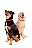 hund- vänner Royaltyfri Fotografi
