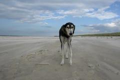 Hund von keinem wo Stockfoto
