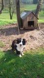 Hund vor seinem Haus Stockbilder