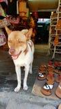 Hund vor Vietnamesespeicher lizenzfreie stockfotos
