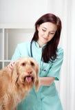 Hund während des Arzttermins lizenzfreie stockbilder