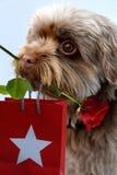 Hund wünscht alles Gute zum Geburtstag Lizenzfreies Stockfoto