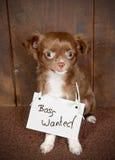 Hund wünscht Chef Stockbilder