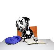 Hund wartet auf einen Anruf Lizenzfreies Stockbild
