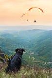 Hund-whith Gleitschirmfliegen Stockfoto