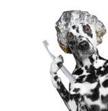 Hund wird die Zähne säubern, nachdem er geduscht hat Lizenzfreie Stockfotos