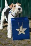 Hund wünscht alles Gute zum Geburtstag Stockbild
