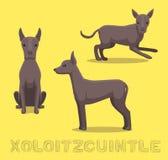 Hund-Xoloitzcuintle-Karikatur-Vektor-Illustration lizenzfreie abbildung