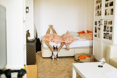 Hund zu Hause berühren stockfotos