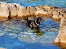 Hund zum Meer Lizenzfreies Stockfoto