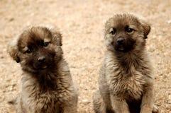Hund zwei Lizenzfreie Stockfotos