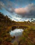 Hunda el lago en una pista de senderismo en Selisoo, Estonia Foto de archivo libre de regalías