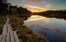 Hunda el lago en una pista de senderismo en Selisoo, Estonia Fotos de archivo libres de regalías
