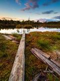 Hunda el lago en una pista de senderismo en Selisoo, Estonia Imágenes de archivo libres de regalías