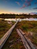 Hunda el lago en una pista de senderismo en Selisoo, Estonia Fotos de archivo
