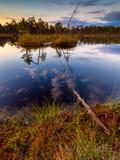 Hunda el lago en una pista de senderismo en Selisoo, Estonia Imagen de archivo