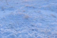 Hunda la hierba en un invierno nevoso con los rastros de animales salvajes en la nieve en el amanecer Foto de archivo