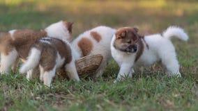 hundar arkivfoto