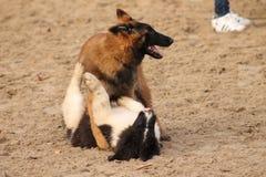 hundar Arkivbilder