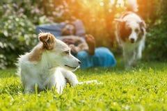 hundar arbeta i trädgården två arkivfoton